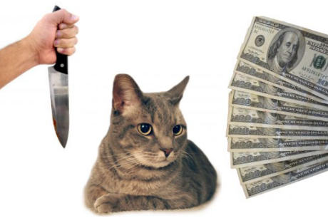 would you turn cat hitman for cash?